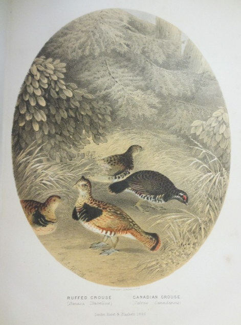 THE SPORTSMAN AND NATURALIST IN CANADA or, Notes on the Natural History of the Game, Game Birds, and Fish of That Country. Major W. Ross King.