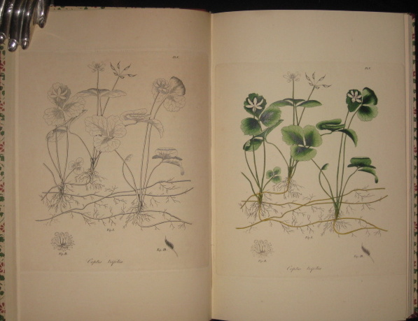 Jacob Bigelow's American Medical Botany 1817 - 1821. An Examination of the Origin, Printing, Binding and Distribution of America's First Color Plate Book. With Special Emphasis on the Manner of Making and Printing Its Colored Plates. Richard J. Wolfe, Jacob Bigelow.