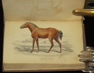 THE NATURAL HISTORY OF HORSES. The Equidae or Genus Equus of Authors. Sir William Jardine, Chas. Hamilton Smith.